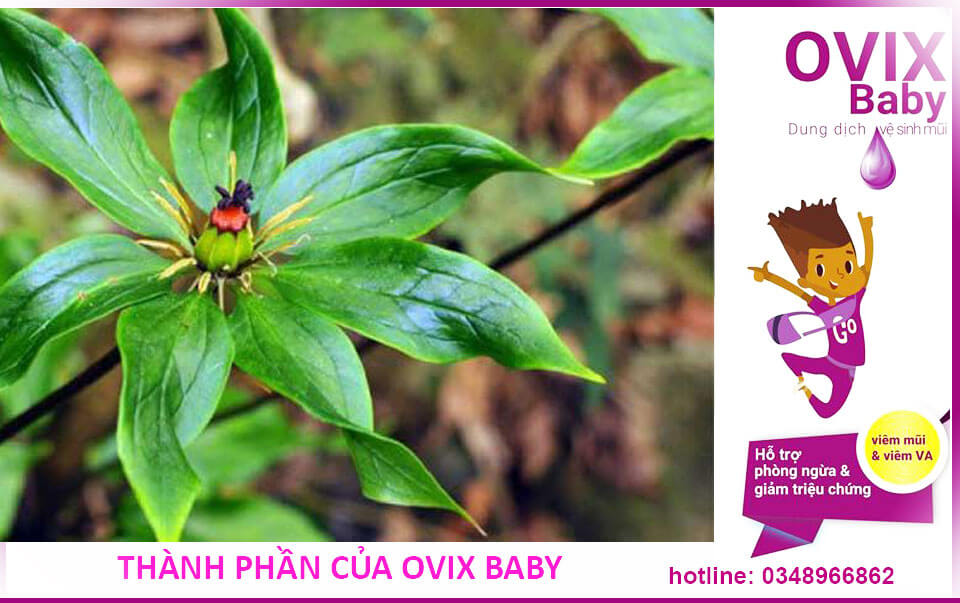 Thành phần của của ding dịch vệ sinh mũi Ovix baby